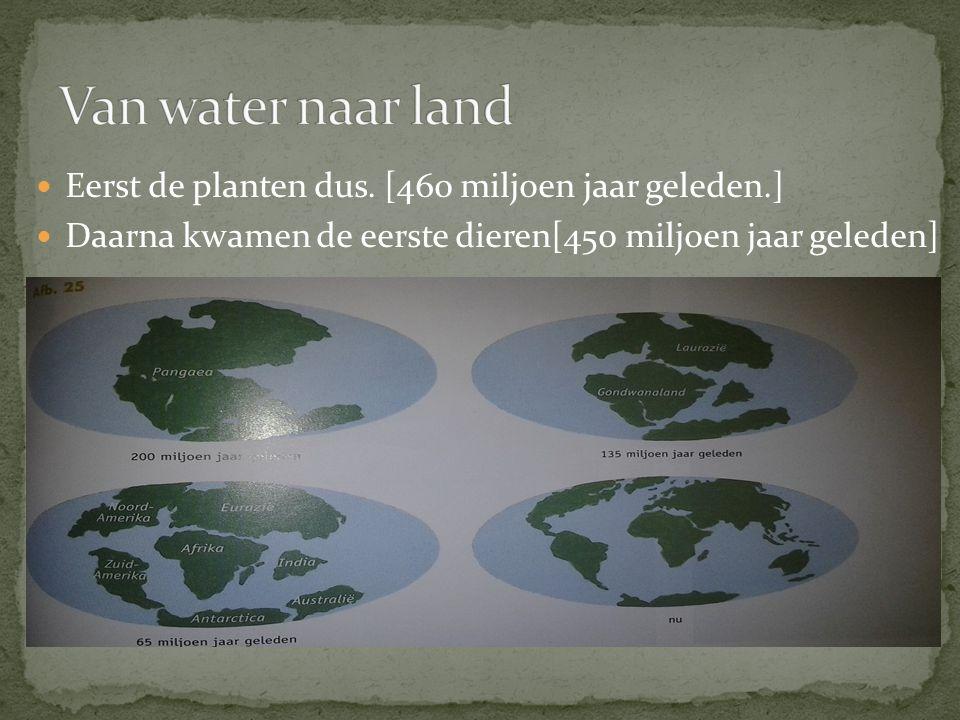 Van water naar land Eerst de planten dus. [460 miljoen jaar geleden.]